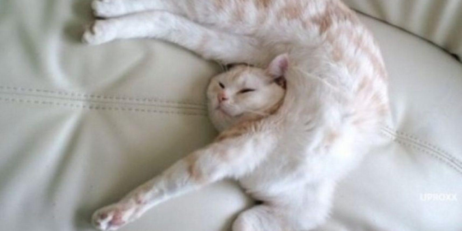 Flexibilidad al máximo Foto:Reddit