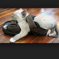 Foto:Tumblr.com/tagged-gato-duermiendo