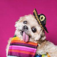 3. Los estereotipos: No todo son sombreros y zarapes Foto:marniethedog