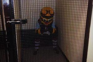 Bertie Bee, la abeja del Burnsley, fue llevada al calabozo de su estadio en un partido de 2013. ¿Su crimen? Pasarle unas gafas a un juez de línea que validó una jugada muy dudosa. Foto:Tomada de sportstalk.co.uk