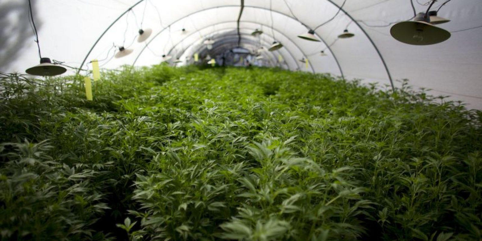 La marihuana sintética es una droga diseñada que en realidad no contiene nada de marihuana. Foto:Getty Images