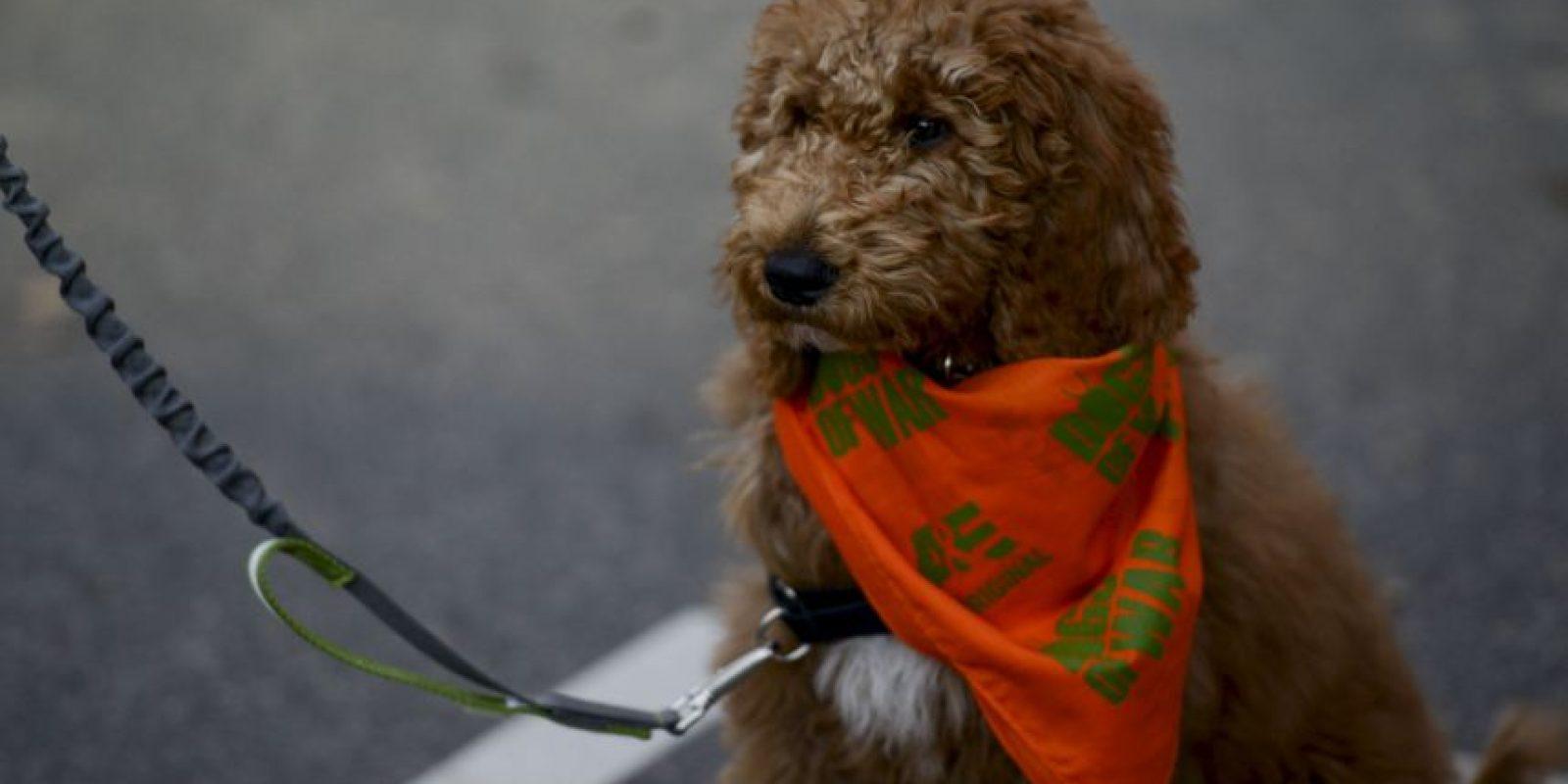 1. Los perros que ladran mucho son odiados por los ladrones Foto:Getty Images