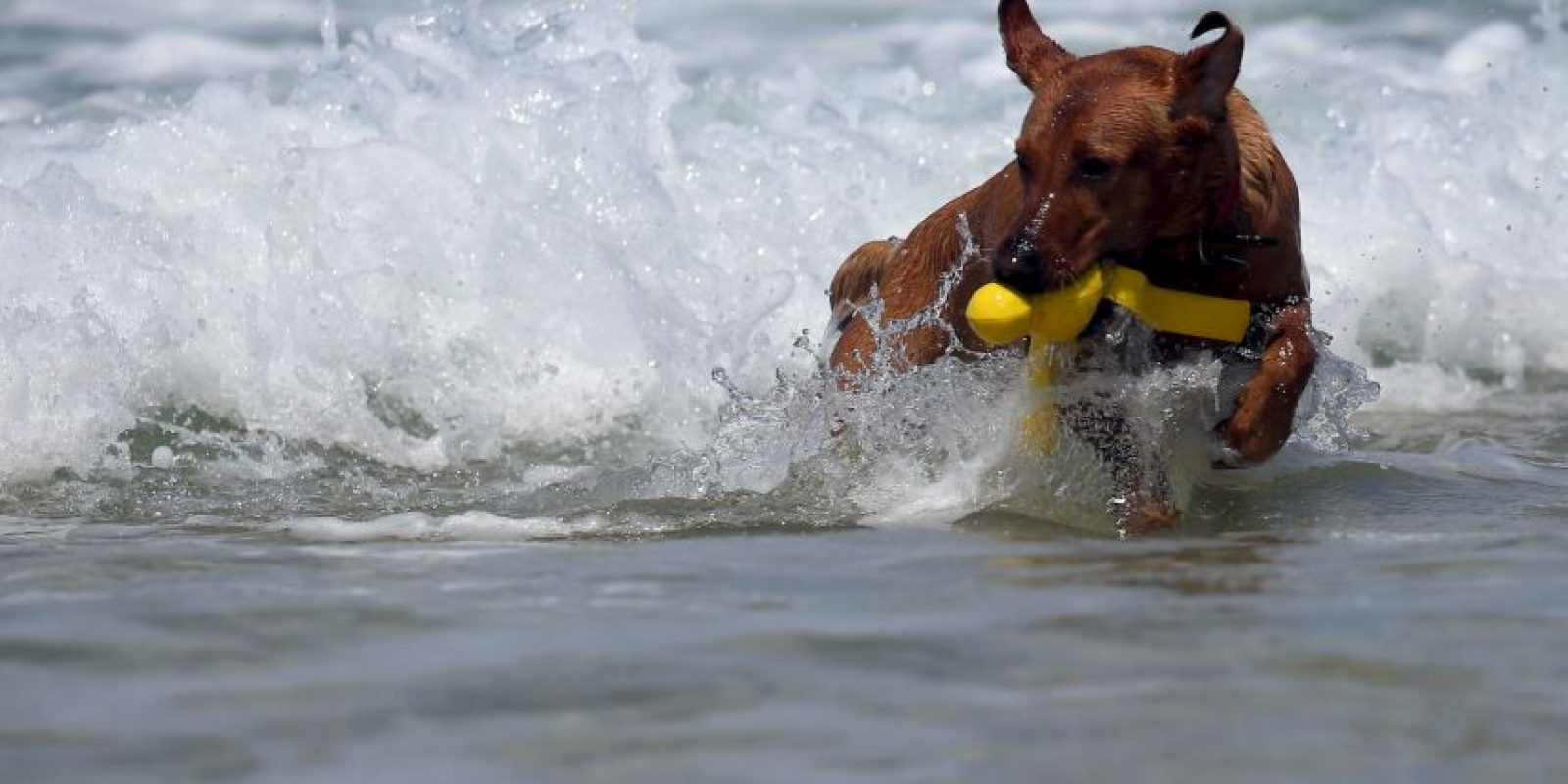 Jugando en la playa Foto: Getty Images