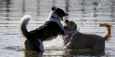 Un juego divertido en el río Foto:Getty Images