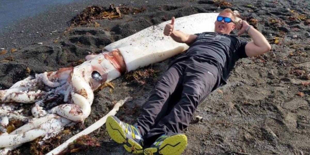 Este monstruo marino fue encontrado en Nueva Zelanda