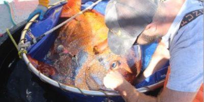 NOAA Fisheries tuvieron capturado a un pez opah durante una campaña de investigación. Foto:Vía swfsc.noaa.gov