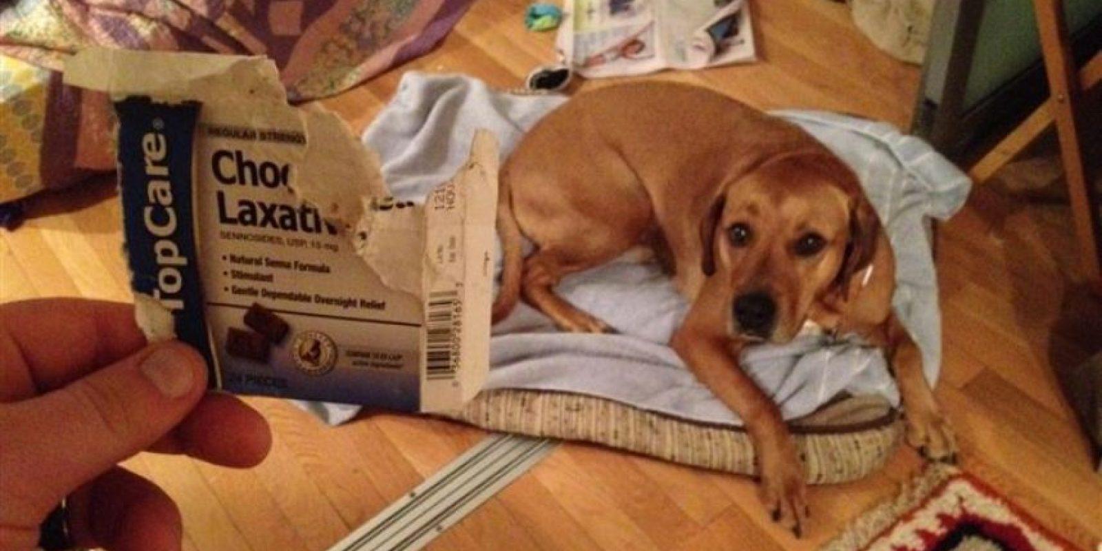 El perro sin estreñimiento. Foto:vía Imgur