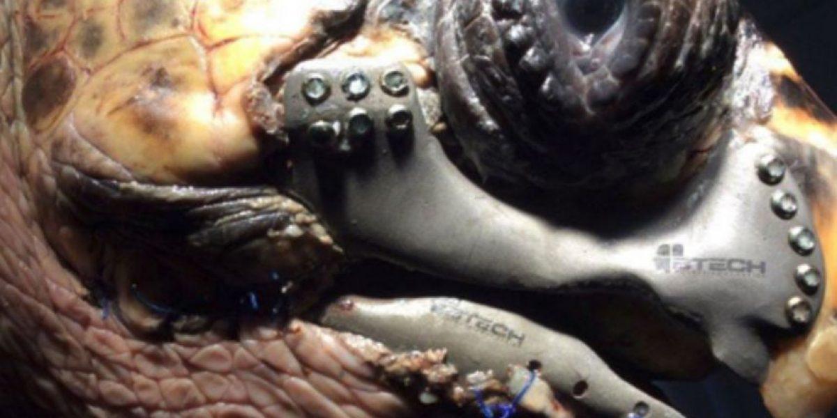 La impresión 3D le salvó la vida a esta tortuga