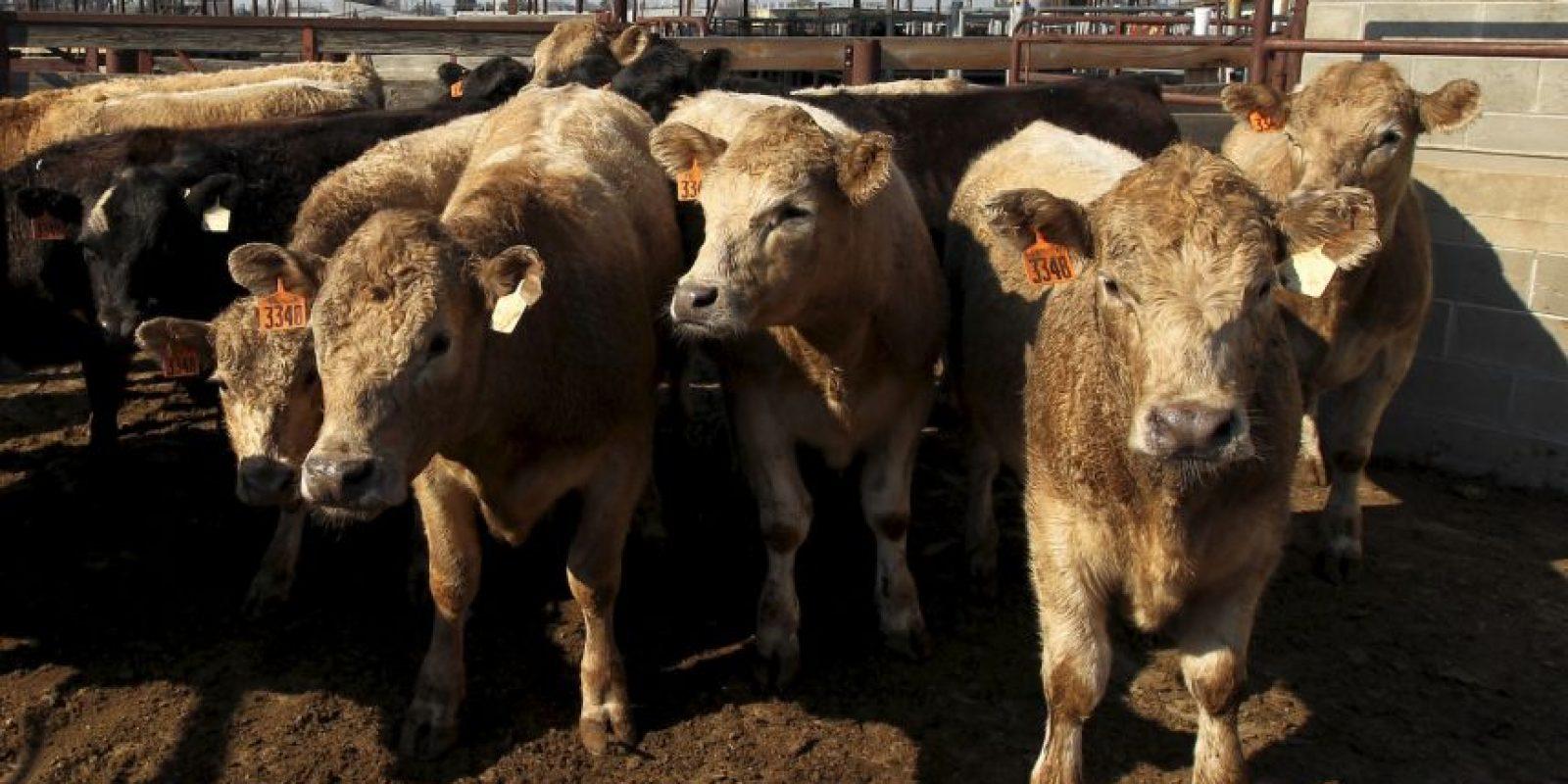 El ataque fue en un mercado de ganado en la aldea Garkida en Nigeria. Foto:Getty Images