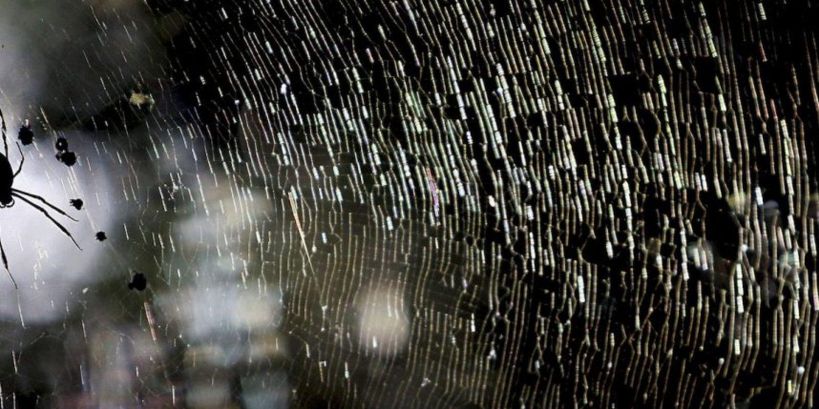 Hacen grupos grandes y vuelan por el cielo. Foto:Getty Images