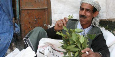 Khat: planta vendida en África y Medio Oriente. Si se mastica de manera recurrente, produce estados de euforia. En casos severos puede producir hemorragia cerebral. Foto:vía Wikipedia
