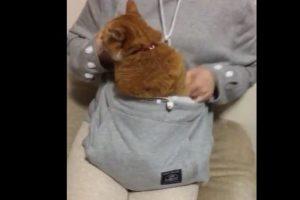 Dicha prenda cuenta con una bolsa muy grande al frente, donde bien puede alojarse un felino o un pequeño perro. Foto:Vía Youtube Unihabitat