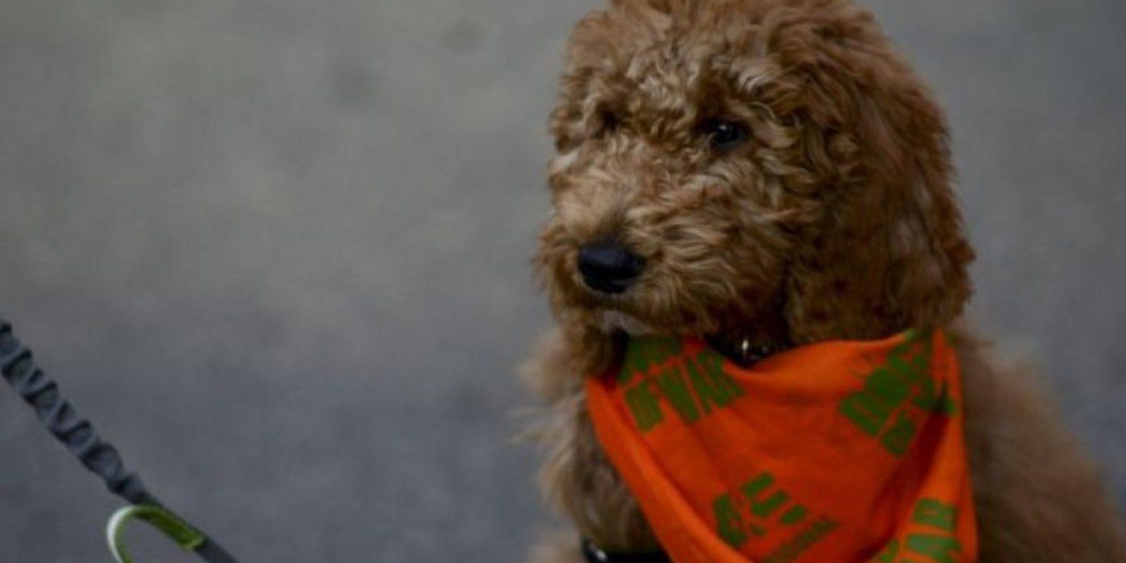 1. A los ladrones les molestan los perros que no se callan y ladran todo el tiempo, ellos podrían ser los más peligrosos porque podrían delatarlos. Foto:Getty Images