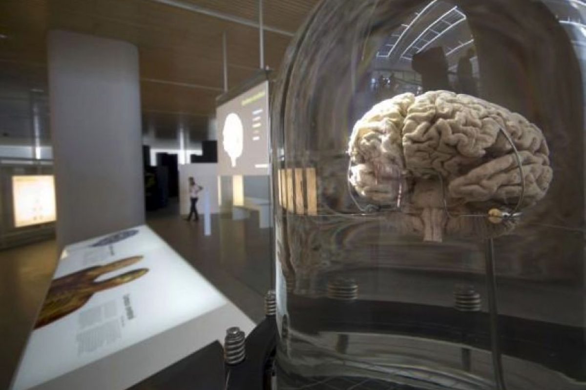 Las neurociencias son un conjunto de disciplinas científicas que estudian la estructura, la función, el desarrollo de la bioquímica, la farmacología, y la patología del sistema nervioso y cómo interactúan sus diferentes elementos, dando lugar a las bases biológicas de la conducta Foto:twitter.com/HealthPointEuro/