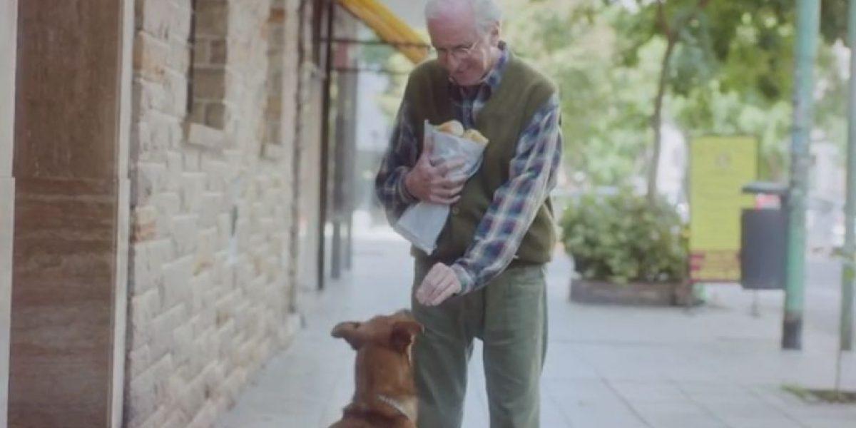 VIDEO: Perro protagoniza una campaña sobre donación de órganos y se vuelve viral