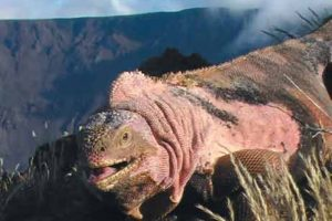 Galápagos es el único lugar en el mundo en el que habita Foto:zmescience.com