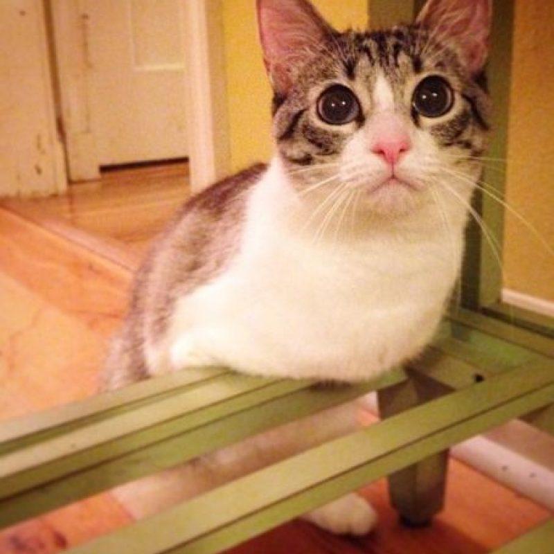 Su nombre es Lil' Bunny Sue Roux y vive en Nueva Orleans, Estados Unidos Foto:Vía Instagram.com/lilbunnysueroux