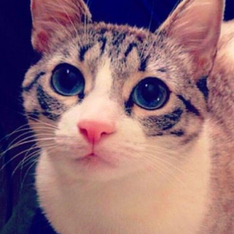 Su propietaria es Jackie Deak Akey, quien trabaja en una clínica de rescate animal de dicha ciudad. Foto:Vía Instagram.com/lilbunnysueroux