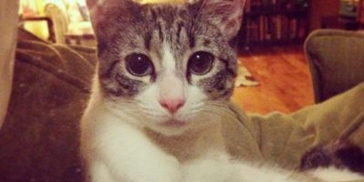 """""""Fue amor a primera vista"""", mencionó la propietaria de la gatita, quien dijo que el mismo día que Roux llegó a la clínica se la llevó por la noche a su casa. Foto:Vía Instagram.com/lilbunnysueroux"""