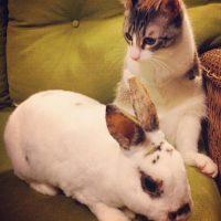 En octubre de 2014, un cliente llamó a la clínica preguntando si en ella se podían quedar con el animalito de dos patas Foto:Vía Instagram.com/lilbunnysueroux