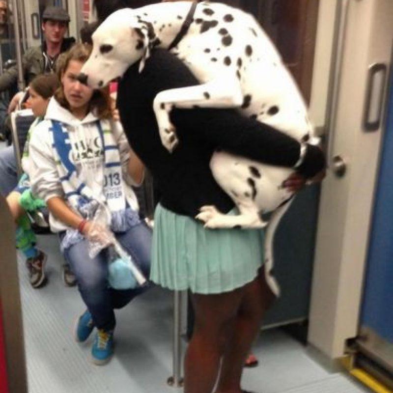 Él tenía mucho miedo Foto:Tumblr.com/tagged/perro/viaje