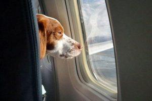 Foto:Tumblr.com/tagged/perro/viaje