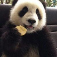 Este padita sí que tiene estilo para comer Foto:Ipanda