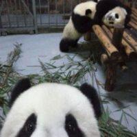¿Un selfie? Foto:Ipanda