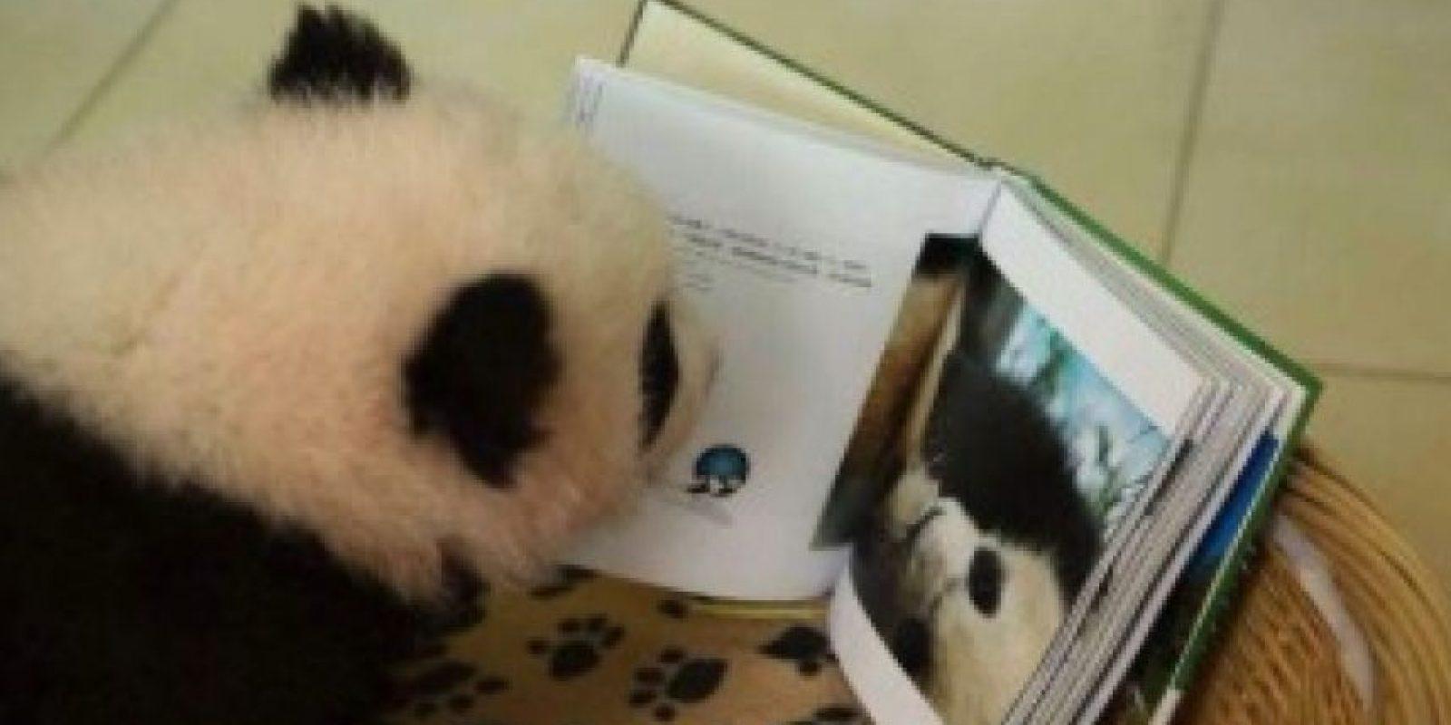 Leyendo… ¿por qué no? Foto:Ipanda