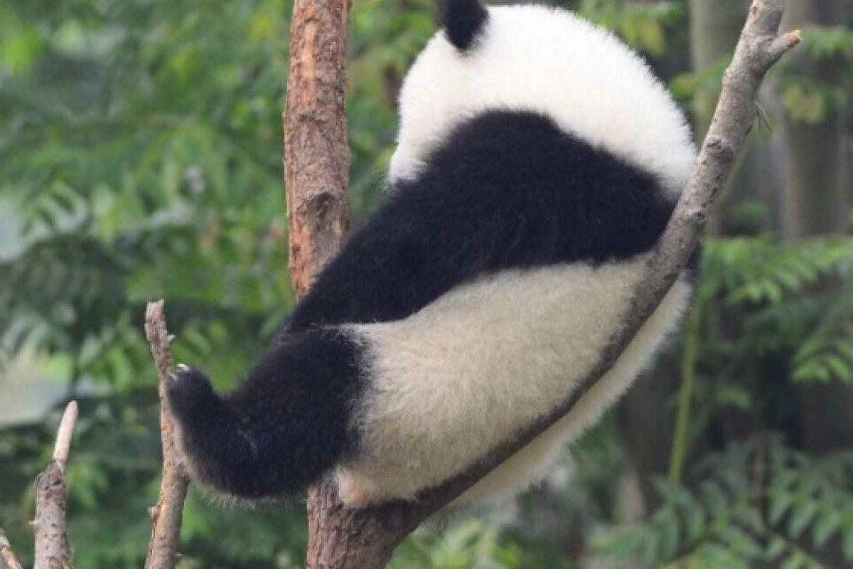 Él necesitaba estar a solas Foto:PandaNewsorg