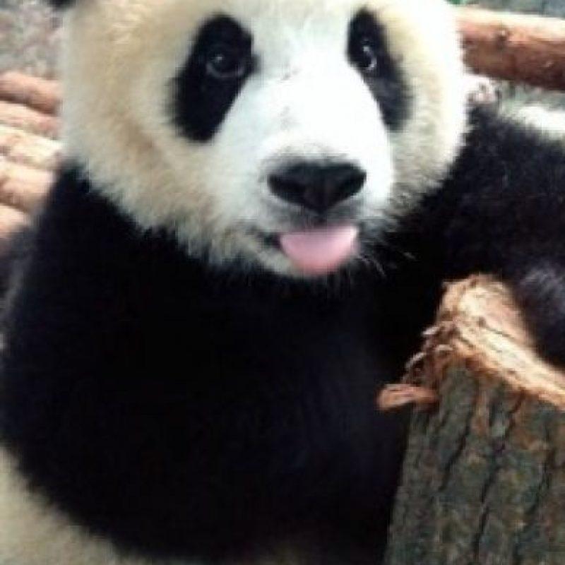 Foto:PandaNewsorg