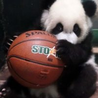¡A jugar baloncesto! Foto:IPanda