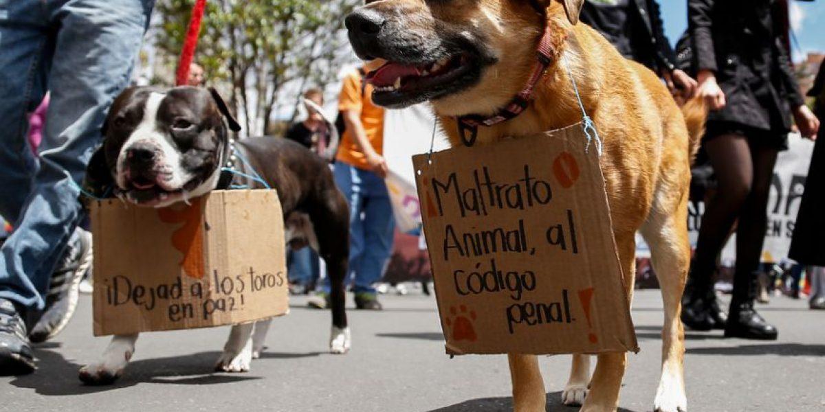 Estos serán los castigos contra los que maltraten animales