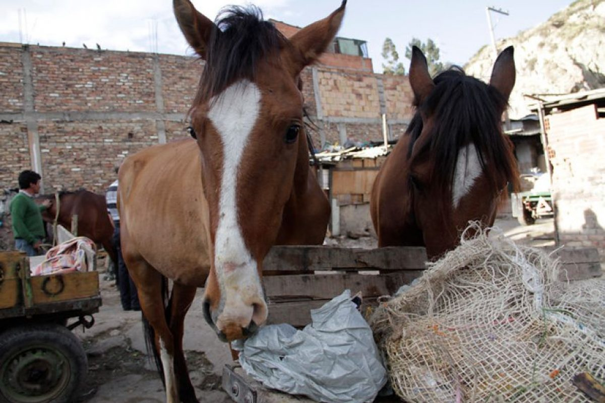 Estos serán los castigos contra los que maltraten animales.