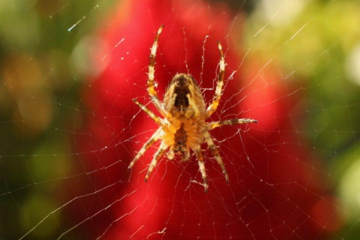 El sistema inmunológico del comportamiento nos advierte de las posibles amenazas cercanas. Foto:Getty Images