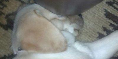 Dormir bajo la base del sillón… No importa… Foto:Reddit