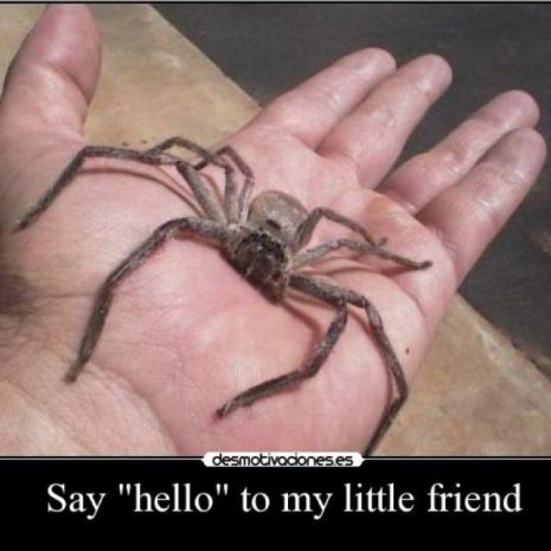 Así que la próxima vez que alguien se burle de que le tienen miedo a las ratas, hormigas o arañas simplemente contesten: Foto:Tumblr.com/Tagged/arañas