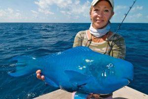 Pez loro azul: vive en el Océano Atlántico. Excretan arena ya que comen moluscos y corales, aparte de algas. Foto:vía Imgur