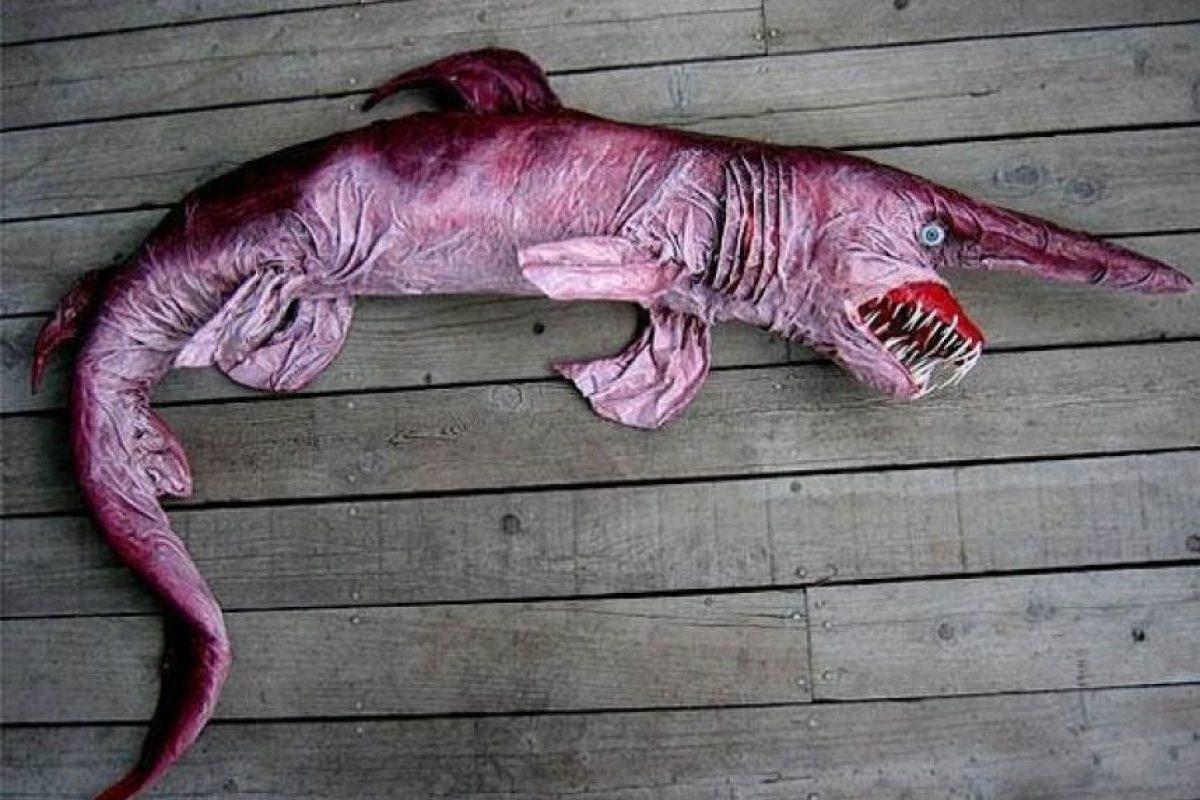 El tiburón duende fue descubierto en el siglo XIX. Se encuentra en aguas bastante profundas. Foto:vía Imgur