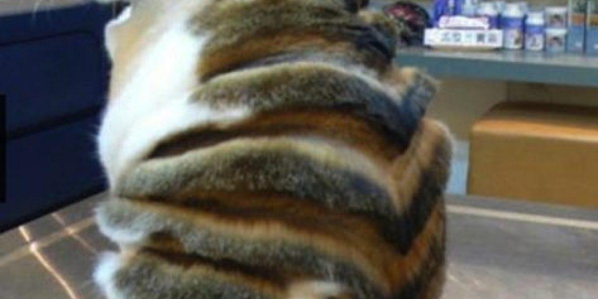 FOTOS: 18 gatos que seguramente