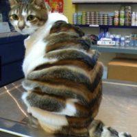 ¿Serían capaces de cortar el pelo de sus mascotas así? Foto:Guff