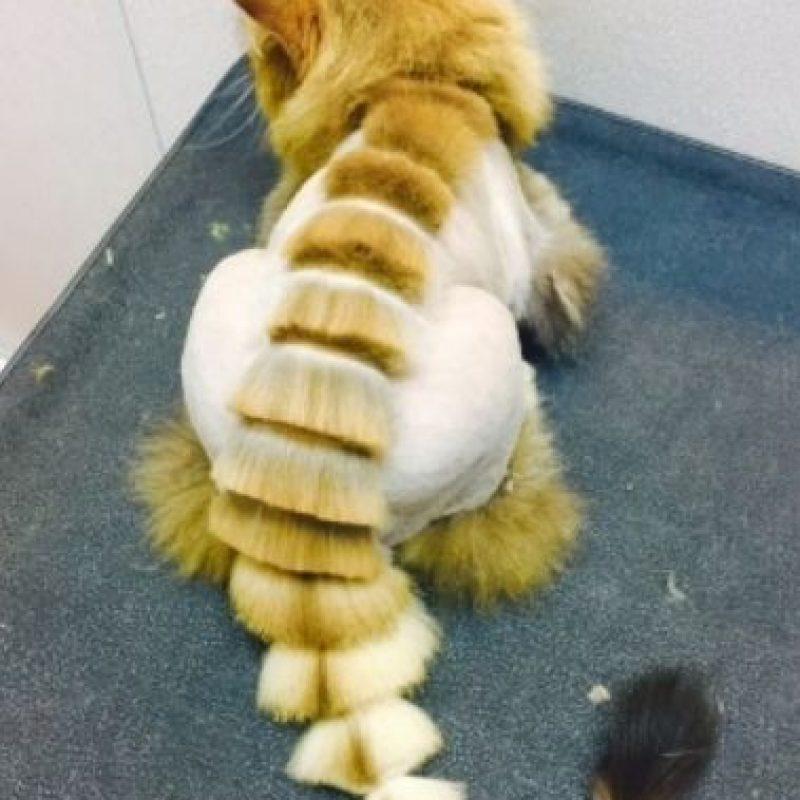 ¿Qué clase de dueño tiene este gato? Foto:Imgur