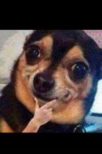 Este perrito ya era famoso, pero en Latinoamérica le pusieron la mano. Foto:vía Facebook