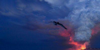 Parque Nacional Galápagos en Ecuador. Foto:AFP