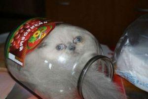 El gato que cabe aquí. Foto:vía Tumblr