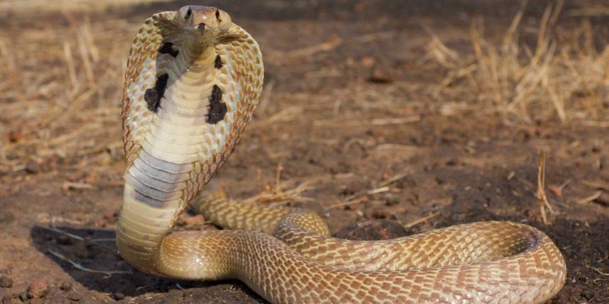 VIDEO: Por mirar su smartphone pisó una serpiente y pasó lo peor