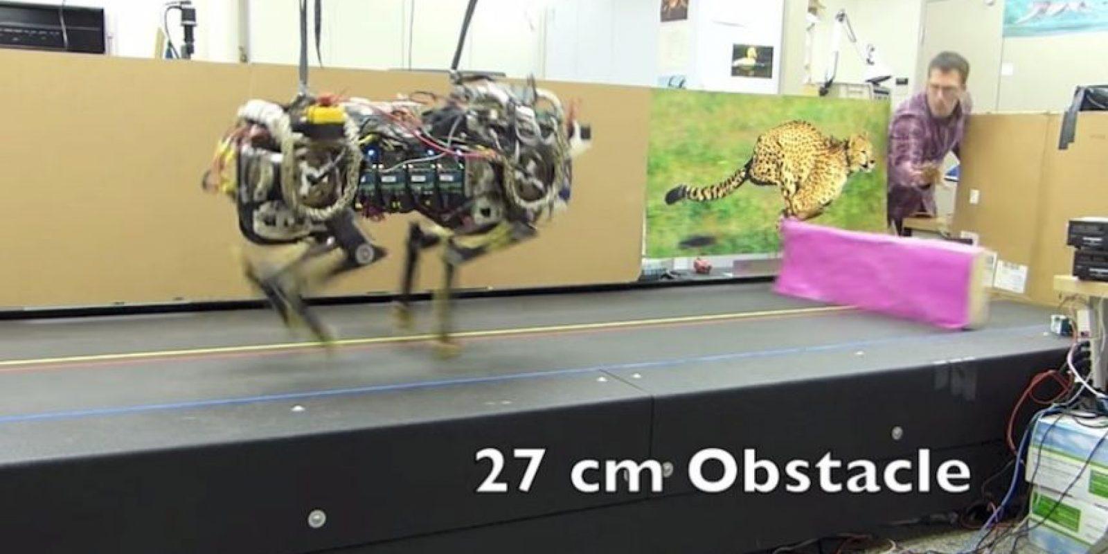 El robot saltando obstáculos de 27 cm de altura. Foto:MIT
