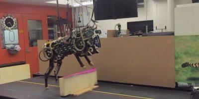 Este robot demuestra que puede saltar obstáculos sin problema. Foto:MIT