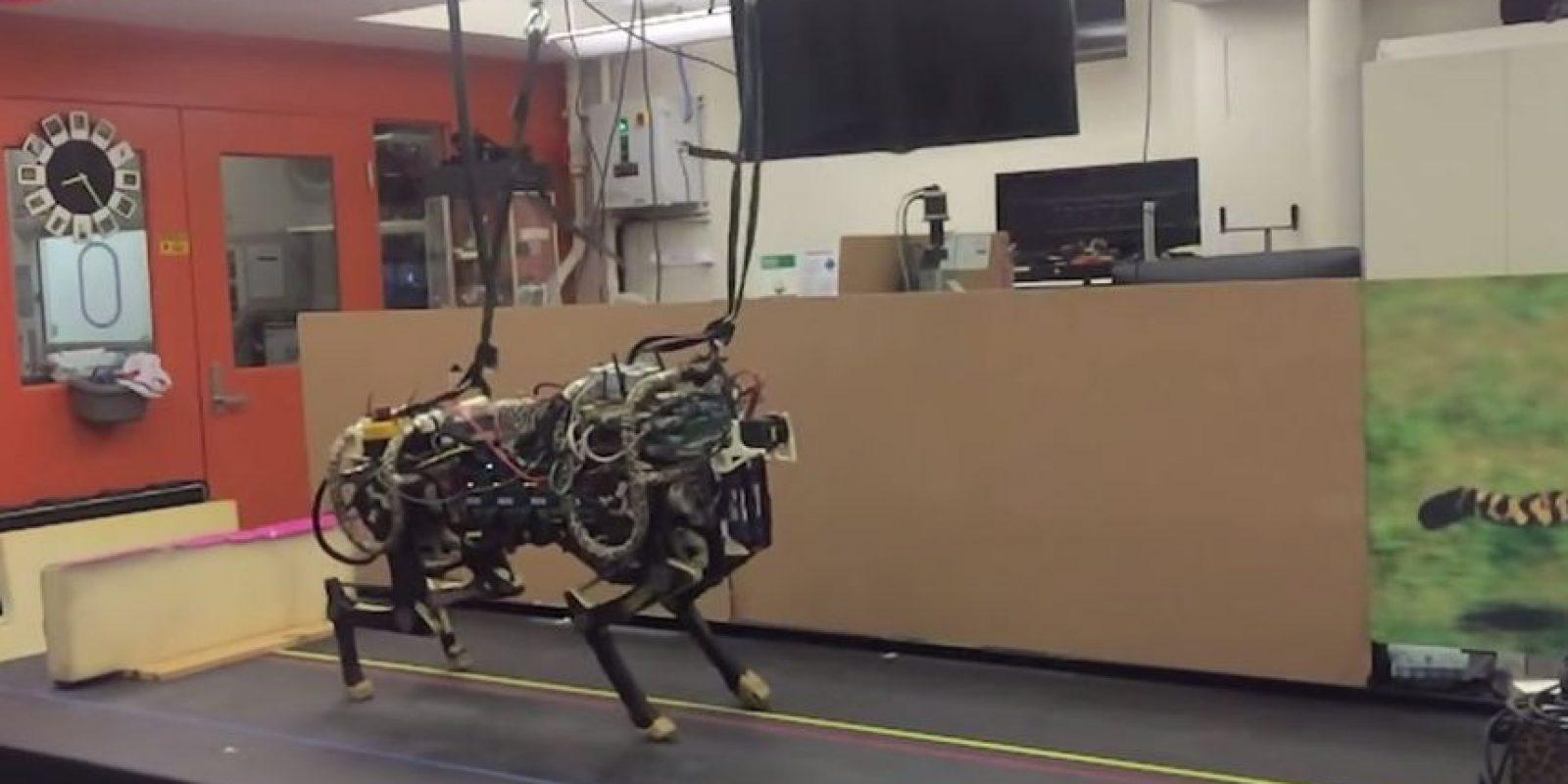 Salta gracias a un sensor ubicado en la parte frontal de su estructura. Foto:MIT