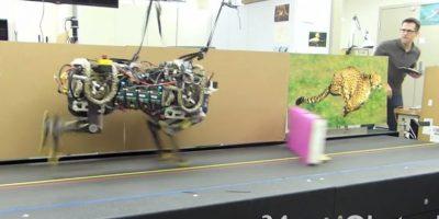 El robot saltando obstáculos de 34 cm de altura. Foto:MIT